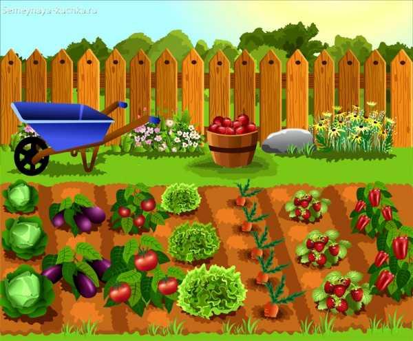 Картинки сад огород для детей – 64 карточки в коллекции ...