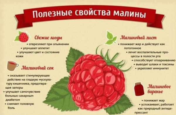 Малина ягода картинки – Ой!