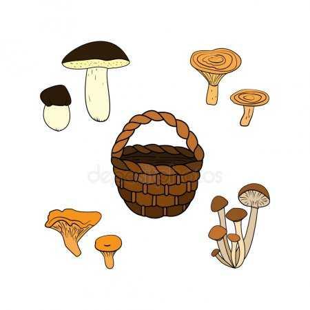 Раскраска для детей корзина с грибами – Раскраска Грибы в ...